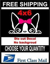 Peeking Dog Girl Boston Terrier,Vinyl Decal Sticker Car/Laptop/ Window White 6yr
