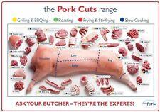 A3 Pig Pork Cuts Butcher Poster Store Print