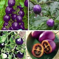 100 Samen lila Kirschtomate Garten Bio Erbstück Obst B3H1 Gemüse Dekor Pfla M4E5