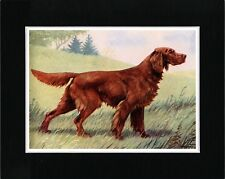 IRISH SETTER LOVELY VINTAGE STYLE DOG PRINT MATTED READY TO FRAME
