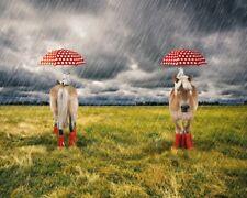 Baumwoll-Jersey Panel Stenzo Pony Gummistiefel Regenschirm rot 120 cm x 150 cm