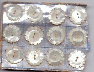 12 vintage shell buttons - on original card