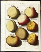 Antique Print-APPLES-TAB VII-Pomologia-Knoop-1758