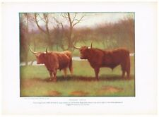 Antique Color Plate Lithograph ~ Highland Cattle ~ 1917 Mammals of Other Lands