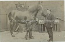 Sheffield, Pitsmoor H. Marshall Horse Real Photo Postcard, C033