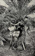 1912 Toddy Man Palm Tree Wine Neera Padaneer India Photogravure Photograph