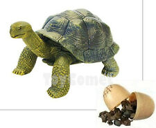 Galapagos Tortoise Reptile Animal Part I 4D 3D Puzzle Egg Model Kit Toy