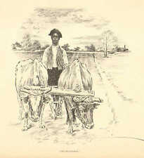 African American, The Ploughman, Cattle, Farming, Vintage 1899 Antique Art Print