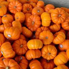 Original Package 25 Pumpkin Seeds Orange Shape Cushaw Cucurbita Seed
