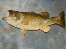 """Brand new 9 Lbs. Real Skin 23 3/4"""" Largemouth Bass Taxidermy Fish Mount Decor"""