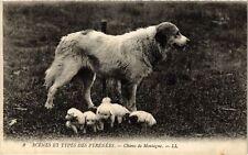 CPA Scénes et Types des Pyrénées - Chiens de Montagne (281883)