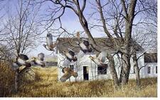 "Richard Plasschaert ""Covey Break"" Quail Farm Print  10"" x 7"""