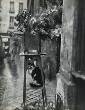1955 Vintage Cat Feline Humor By Robert Doisneau Garden Flower Photo Art 16x20