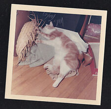 Vintage Photograph Cute Cat / Kitten Sleeping by Straw Sombrero & Shoes