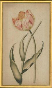1805 Watercolour - Tiger Tulip Study