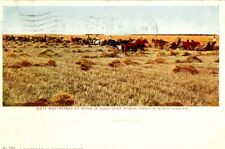 North Dakota,  60 Harvesters at Work in 1907 50,000 Acre Wheat Field