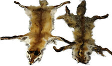 lot of 2 Red Fox Fur Fox Skin Pelt Taxidermy Rug Decor Display