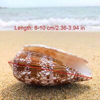 Natural Asprella Shell Conch Sea Snail Fish Tank Aquarium Decor Ornament Fun Toy