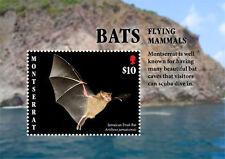 Montserrat 2017 fauna flora bats S/S-I70096