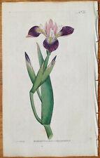 CURTIS Botanical Magazine Vol. 1 Plate 21 Iris versicolor 1790