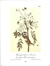 White-Eyed Vireo or Greenlet Vintage Bird Print by John James Audubon