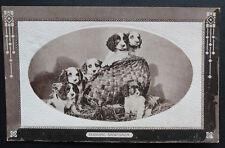 "Dog Postcard, Springer Spaniel Puppies? ""Budding Sportsman"" Wildt & Kray"