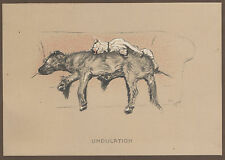 Cecil Aldin Dog Print Cracker Bull Terrier Micky Irish Wolfhound Hunting Farm 4