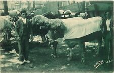 #258. Pays Basque. Spain Farmer Tending Cattle? Postcard