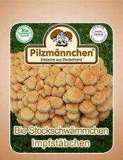 Stockschwämmchen Impfstäbchen (20 Stück) , Pilze auf Holz züchten, Impfdübel