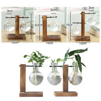Crystal Glass Test Tube Vase in Wooden Stand Flower Pots for Plant Hydroponic