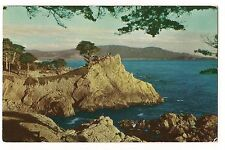 MIDWAY POINT Cypress Tree Carmel Pacific Grove Monterey CALIFORNIA Postcard