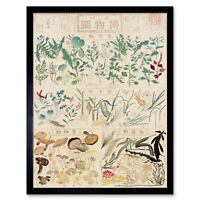 Kato Chikusai Species of Flora Fauna Mushrooms Japanese Wall Art Print Framed