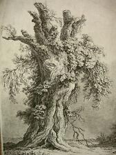 """FRANZ GABET (GAWET) """"KNORRIGER BAUM, EICHE"""" NACH WEIROTTER, (WIEN), 1793"""