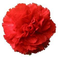50 SCARLET RED CARNATION Caryophyllus Grenadin Flower Seeds + Gift & Comb S/H