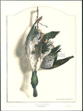 ANTIQUE PHOTO STILL LIFE REPRINT 8X10 DEAD HANGING GAME  DRAKE SHOVELER DUCK