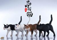 JxK.Studio JxK003 1/6 Chinese Felis Catus Cat Resin Animal Pet Statue Model Toy