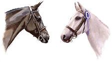 2 Horses POSTCARD Animal Painting Art Steve Greaves Equestrian Print Portrait