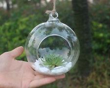 1PC Planter Clear Glass Vase Container Pot Terrarium Flower Hanging Home Decor
