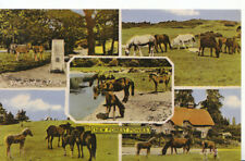 Animals Postcard - Ponies - New Forest - Hampshire - Ref 417A