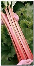 """Ukrainian Organic Vegetable Rhubarb seeds """"Leader"""" Pieplant - 50 Seeds."""