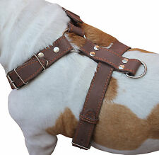 "Quality Leather Walking Dog Harness 35""-39"" chest size Newfoundland Great Dane"