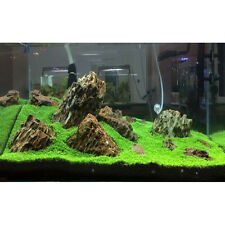 "Fish Tank Aquarium Plant Grass Seeds ""Australia""  Decor Home Garden Easy Plant"