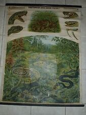 Original vintage zoological pull down school chart of snake Viper , A. Kull
