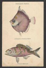 Hawaiian Fishes vintage colour postcard