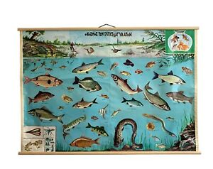 Vintage Freshwater Fish chart, Freshwater Fish Poster, Fish Pull Down Map,