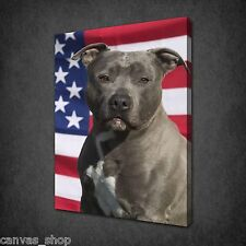 AMERICAN STAFFORDSHIRE TERRIER DOG WALL ART CANVAS PRINT PICTURE READY TO HANG