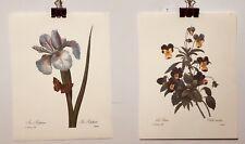 "FINE ART LITHOGRAPH:  2 Botanical Prints ""Iris And Pansy"" 8 1/2 X 11"
