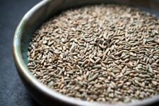 5lb Organic Cereal Rye Whole Grain Berries Clean Top Quality Untreated Ship Free