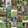 Novelty Fairy Garden Ornament Outdoor Elves Fairies Mushroom Elf Pixie Door rare