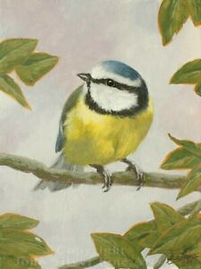BEAUTIFUL COLOURFUL BLUE TIT ORIGINAL BIRD PAINTING 8 x 6 inch by JOHN SILVER BA